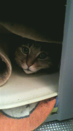 そのくせ、お外が恋しくなってテント生活。ヒーターのカバーにすっぽり入って眠ります。