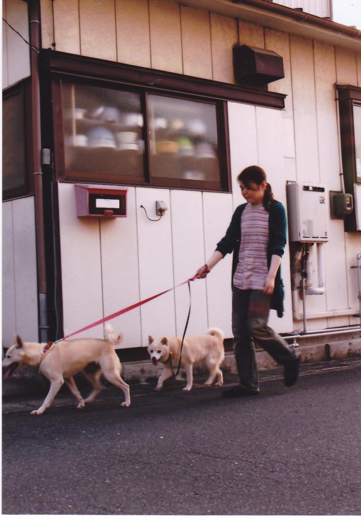 リコとマメコと散歩する五井さん。虹の橋もこうして歩いているかなぁー。リコとマメコと散歩する五井さん。虹の橋もこうして歩いているかなぁー。