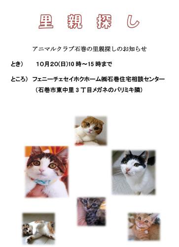 里親探し2013.10