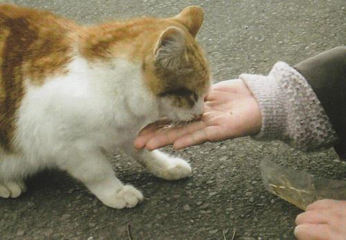 人の手から食べるよく馴れた猫がたくさんいました。