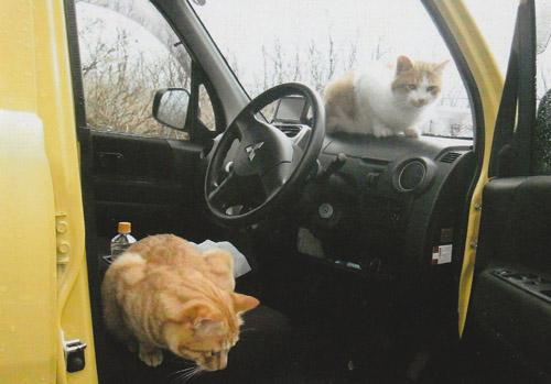 車でここに運ばれて捨てられたのでしょうか?ドアを開けていたらすぐ中に入られました。 また車に乗れれば、暖かい家に帰れると思っているのかもしれません。