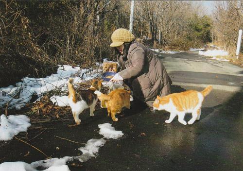 車の到着を待ちかねて、あちらこちらから猫が集まって来ました。