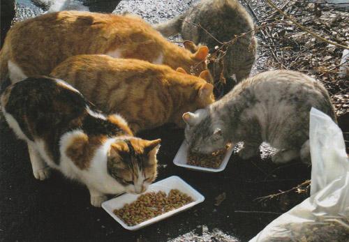 旺盛な食欲で丸々と太っている猫が多いのが救いでした。