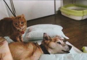 すっかりやせ細ってしまったクマの枕元に付き添うダンちゃん