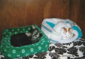 皮膚病もなく、人なれしている猫達はケージから出されて、家猫らしい暮らしをしている。 「早くみんなを出してやりたいな~」。