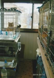 家の裏に建てた猫小屋内部。棚を付けて、上下にケージが並んでいる。
