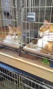 皮膚病がなかなか治らない猫達。暑いのに首巻きをされて気の毒になる。