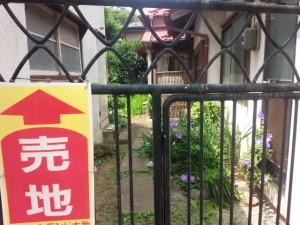 石巻市内には空き家が多く、野良猫の住処になっている。