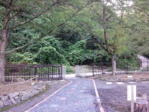 公園になった山。リコ、マメコ、クララのお墓はどこか、もうはっきり分からない。