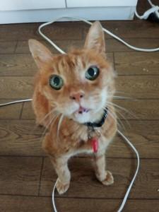 痴呆になり、目を三角にして、1日中食べ物を請求している団蔵。