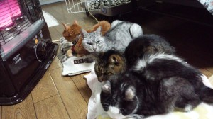 暖房にかじりついている老猫たち