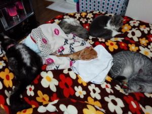 団蔵が眠るとトラ、ペタ、ムー、ミミオのシニアチームがぐるりと囲んで護衛した。