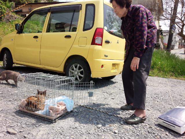おばあさんが餌付けした大きなお腹の野良猫を捕獲、避妊して10日後、いた場所に放しに来ました。