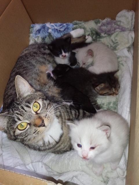 認知症のおばあさんが餌付けした野良猫が、家に入って出産。独居老人が猫を増やすケースが多いです。