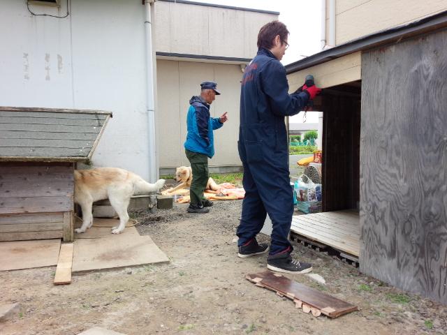 加藤さんが犬舎を作りに来てくれた日。レオはおじさんの奥で、起き上がっています。